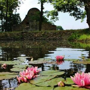lekníny na rybníku s barokním štítem