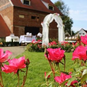 rozkvetlá růžová zahrada