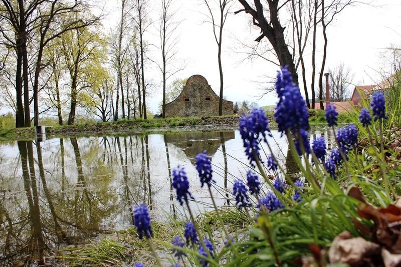 Miluji a jaro! Příroda se probouzí a ze země se derou jako o závod jeho poslové.
