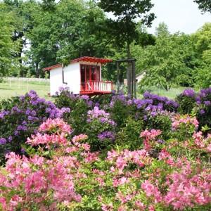 V popředí rhododendron Reve D Amour