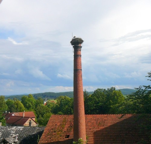 Čáp, 2009